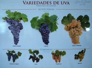 Variedades de uvas