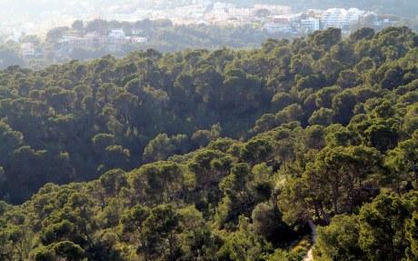 Bosque de pinos de Bellver