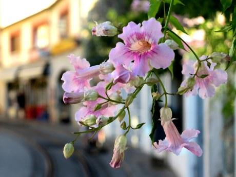 Flores desenfocadas