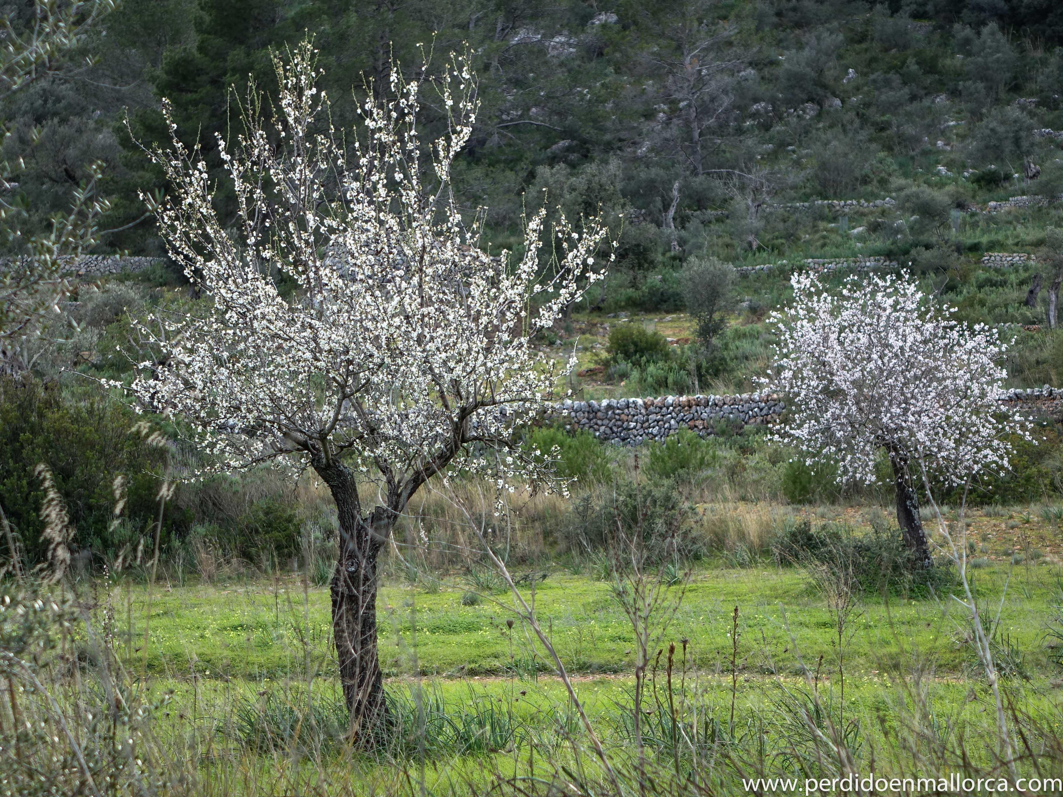 Arboles para jardin que den sombra fabulous bauhinia for Arboles para jardin que den sombra