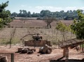"""Noria de """"sang"""" movida por una mula cegada con anteojeras que daba vueltas sin fin para que los cangilones extrajeran el agua."""