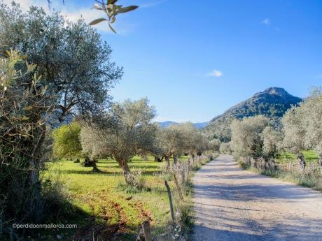 Camino_Carretero