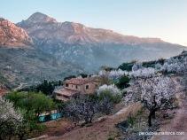 Entre finales de Enero y Febrero florecen los almendros del valle de Fornalutx regalándonos vistas de gran belleza.